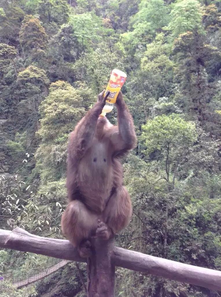 Cheeky monkey China